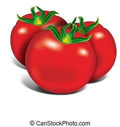 Red Tomatos - Red tomatos on white background, illustration