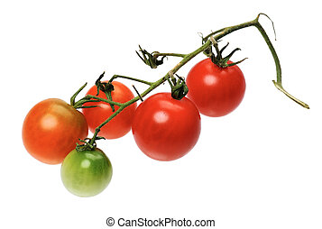 Red tomatto, isolated