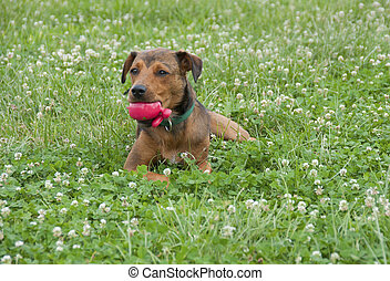 Red toy in mouth