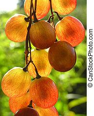 red transparent grapes