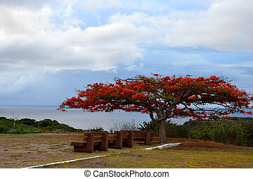 red tree and wooden bench