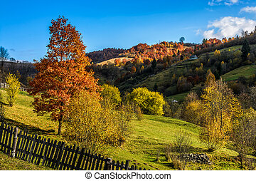 red tree behind the fence on hillside - Carpathian rural...