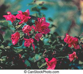 Red tree flower over blue sky.