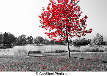 Red Tree Over Park Bench - Empty park bench under red tree...