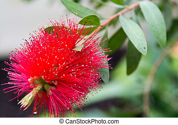 Red tropical flower growing in the wild on a natural green background