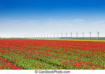 Red tulip field with windmills on sky horizon