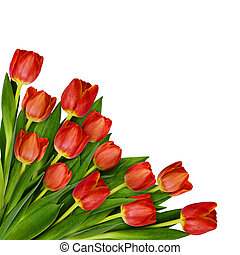 Red tulip flowers bouquet in a corner