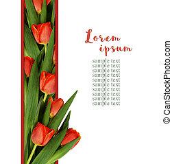 Red tulip flowers in a line arrangement