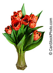 Red tulip flowers in a vase