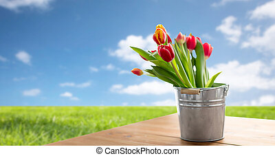 red tulip flowers on table over blue sky and grass