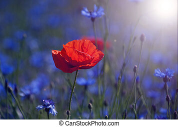 Red tulip in the middle of a field with blue cornflowers