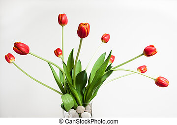 Red Tulips - A vase of red tulips against a white...