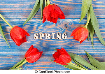 Red tulips and inscription spring on boards, springtime decoration