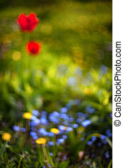 Red tulips and yellow dandelions in the garden on a sunny day. Blurry