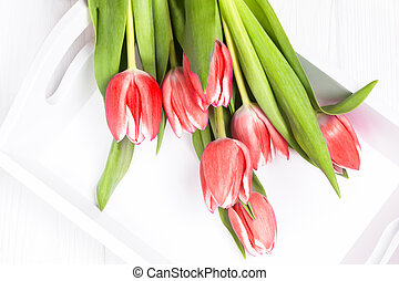 Red tulips flowers on a white background, top view