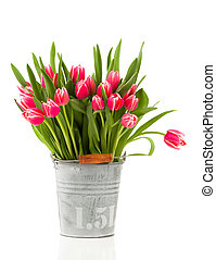 red tulips in a bucket, on a white background