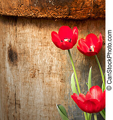 Red tulips in the garden on wood background