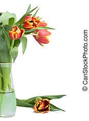 red tulips in vase