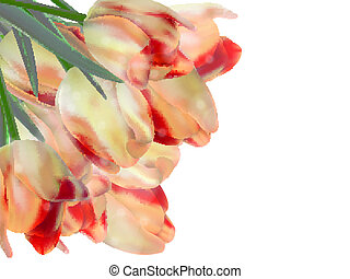 Red tulips isolated on white. EPS 10