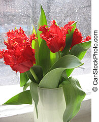 red tulips on the windowsill