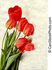 red tulips on vintage background