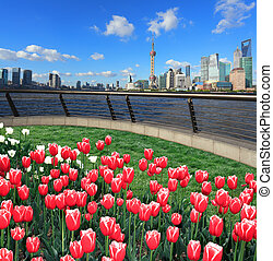 Red tulips prospects of Shanghai bund of Lujiazui Finance&Trade Zone at sunny skyline