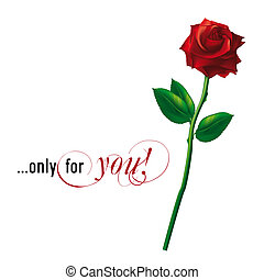 red vector rose isolated on white background