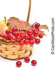 Red viburnum berries and ripe apple in the basket