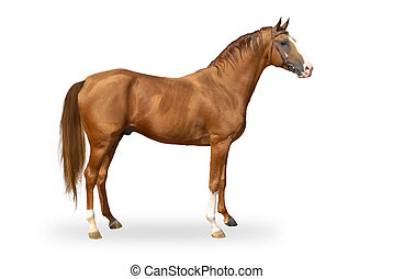 Red warmbllood horse isolated on white. Collage. Illustration