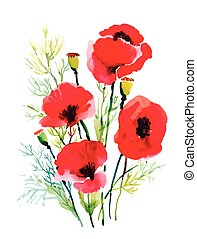 Red watercolor poppies flowers isolated on white background.