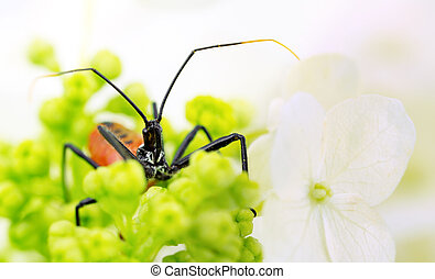 Red wheel bug in flower cluster