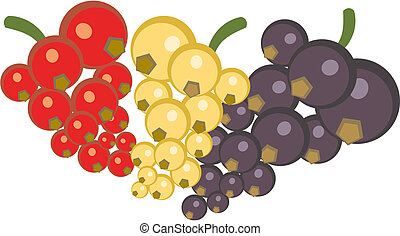 red, white and black currants - sprigs of red, white and...