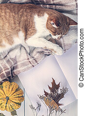 Red white cat sleep on plaid, pumpkin, autumn leaves, notepad. Autumn winter beautiful background