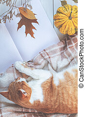 Red white cat sleep on plaid, pumpkin, autumn leaves, notepad. Autumn winter beautiful background