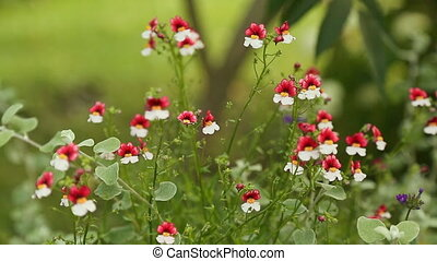 Red-White small flowers