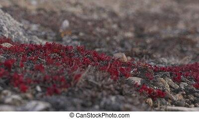 Red Wild Flowers In Rocky Soil