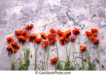 Red wild poppies on grey stone background