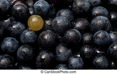 Red wine grapes background, dark grapes, blue grapes, wine grapes 05