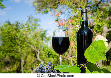 Red wine glass and bottle in a garden with some vine and grapes on a sunny day