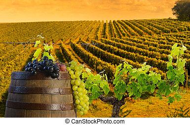 Red wine with barrel on vineyard in Bordeaux Wineyard,...