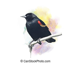 Red-Winged Blackbird watercolor - Digital Painting of Red-...