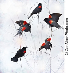 Red Winged Blackbirds Sitting On Branches