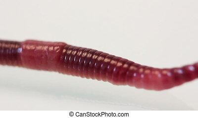 red worm macro