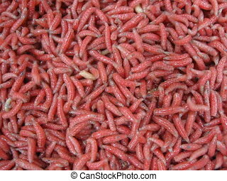 red worms heap, helminth movement - red worms heap closeup,...
