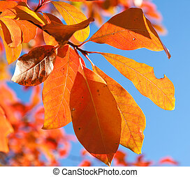 red yellow fall  leafs on blue sky background