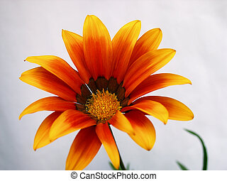 Red-yellow flower 3