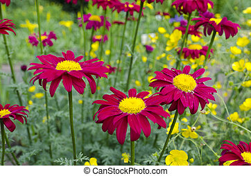 red-yellow flowers on the meadow