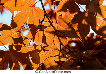 red yellow leaves