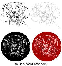 redbone, ritratto, coonhound, cane