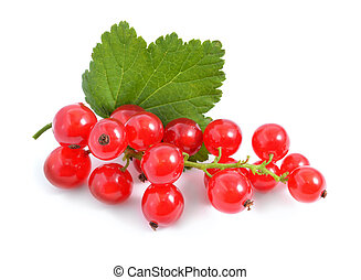 Redcurrant isolated on white background - Redcurrant...